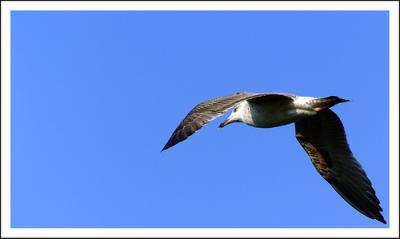 El vuelo de la gaviota.